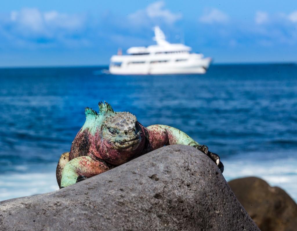 Redenen waarom een cruise in de Galapagos de beste manier is van reizen