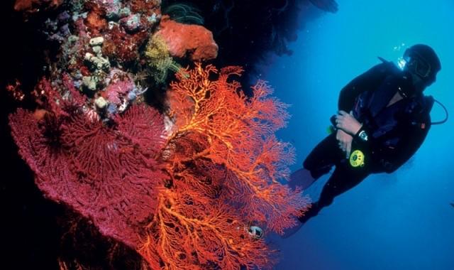Reizen Indonesië snorkelen